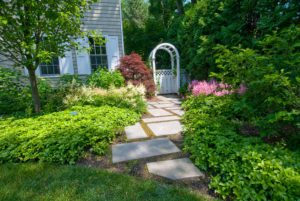 Stepper-Path-and-Arbor